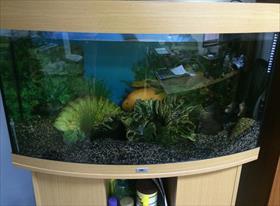 Чистка аквариума для youdo.com/t2860173