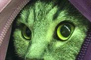 Кот напрокат 🐱