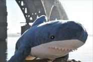 Акулы в каждый дом!