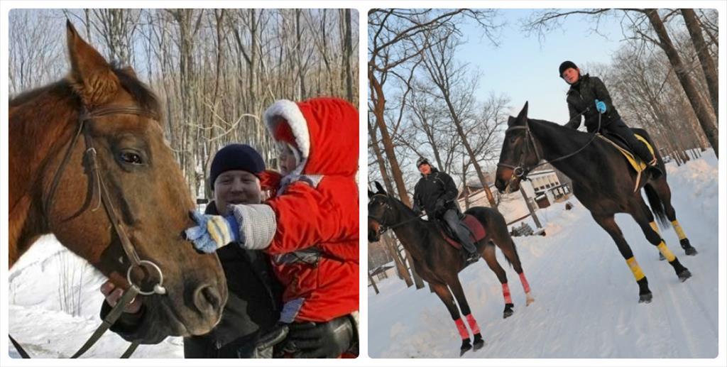 фотосессия зимой с лошадьми